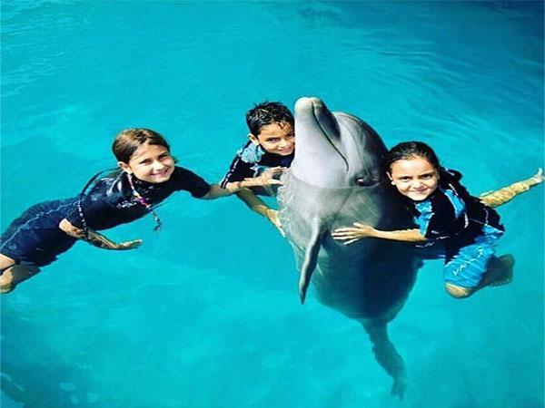 شنا با دلفین مجموعه پارک دلفین کیش