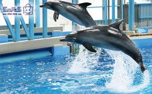 بلیط پارک دلفین کیش