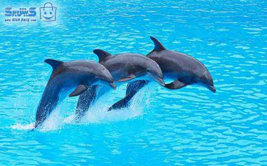 پارک دلفین در کیش