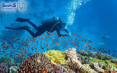 غواصی VIP کلوپ مارین دریا – ساحل مرجان